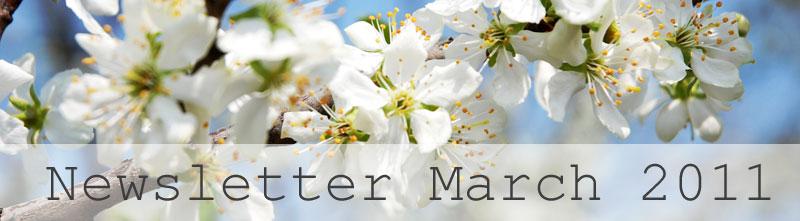 Spring image - cherry blossom